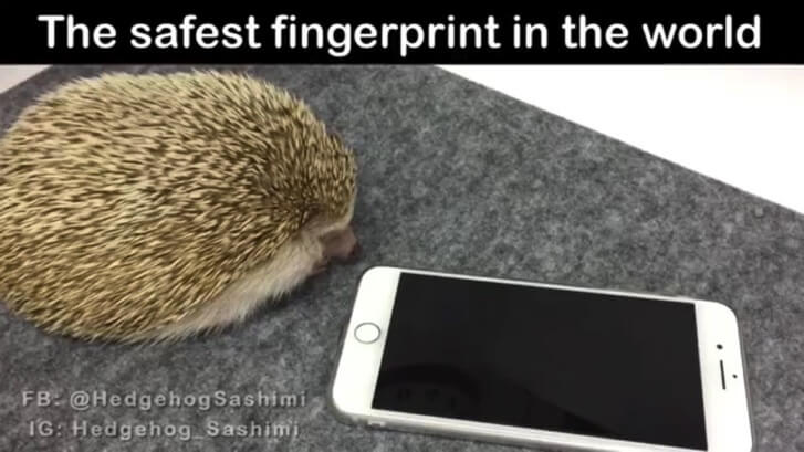 The safest fingerprint in the world 1